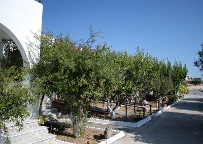 Scarpantos Studios: Fruit trees around these Karpathos studios